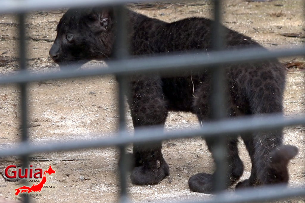 Zoológico Municipal de Hamamatsu 33