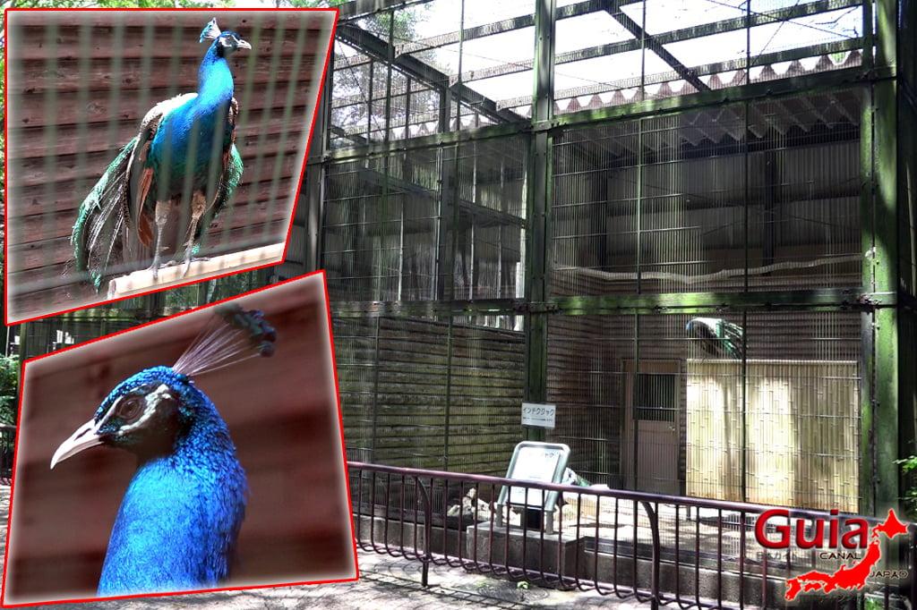 Zoológico Municipal de Hamamatsu 39