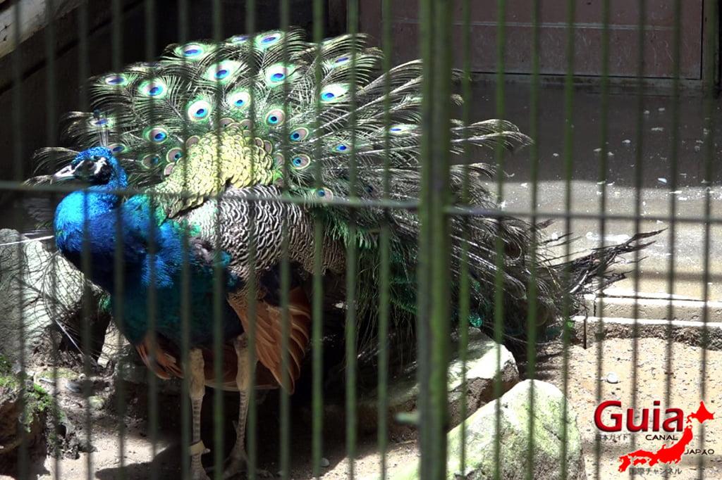 浜松40市立動物園