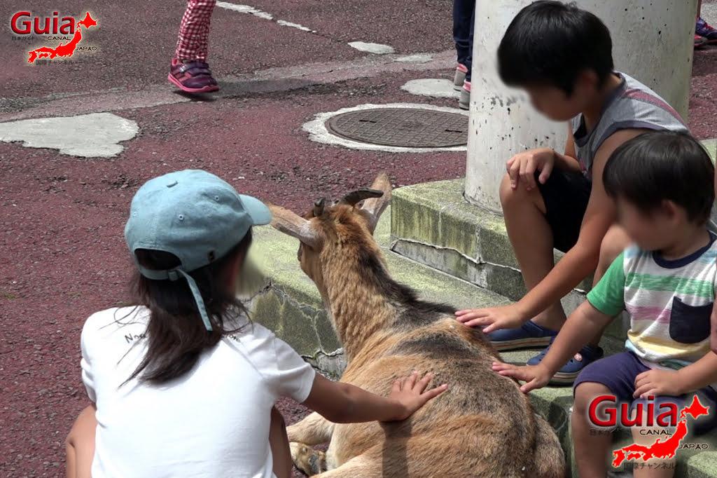 Zoológico Municipal de Hamamatsu 5