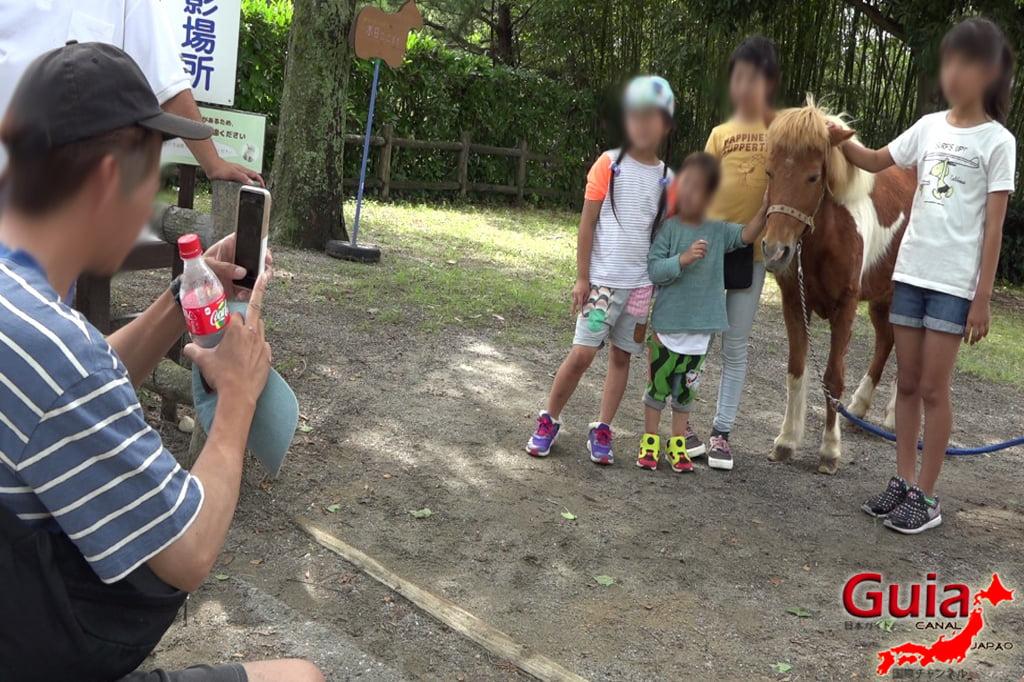 Zoológico Municipal de Hamamatsu 8