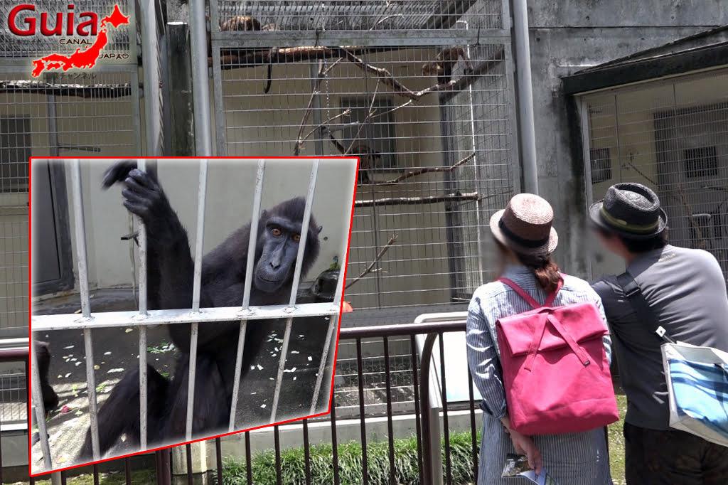 Zoológico Municipal de Hamamatsu 16