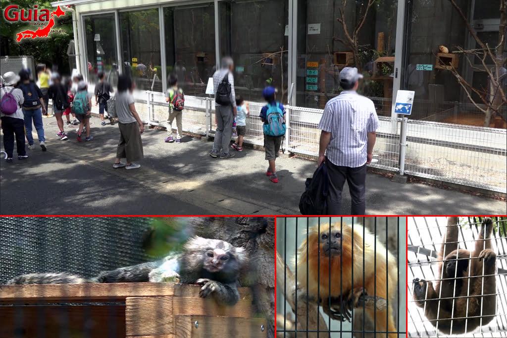 Zoológico Municipal de Hamamatsu 17