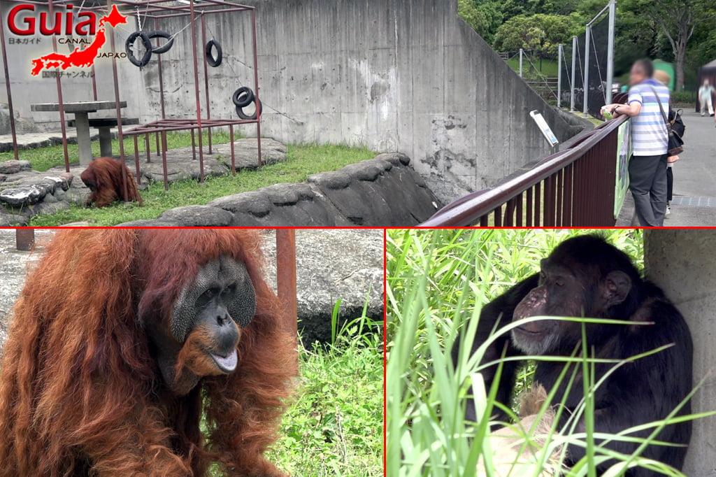 Zoológico Municipal de Hamamatsu 18