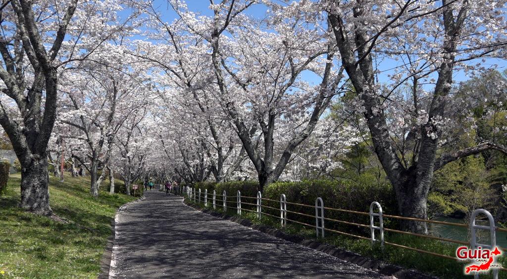 Sakura Hiratobashi Park - Toyota 「平 戸 橋 公園」 13