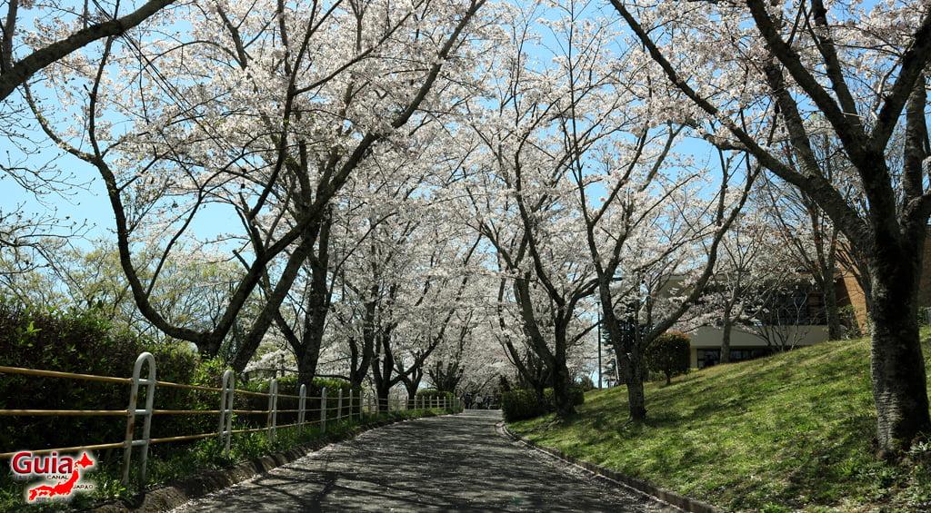 Sakura Hiratobashi Park - Toyota 「平 戸 橋 公園」 14