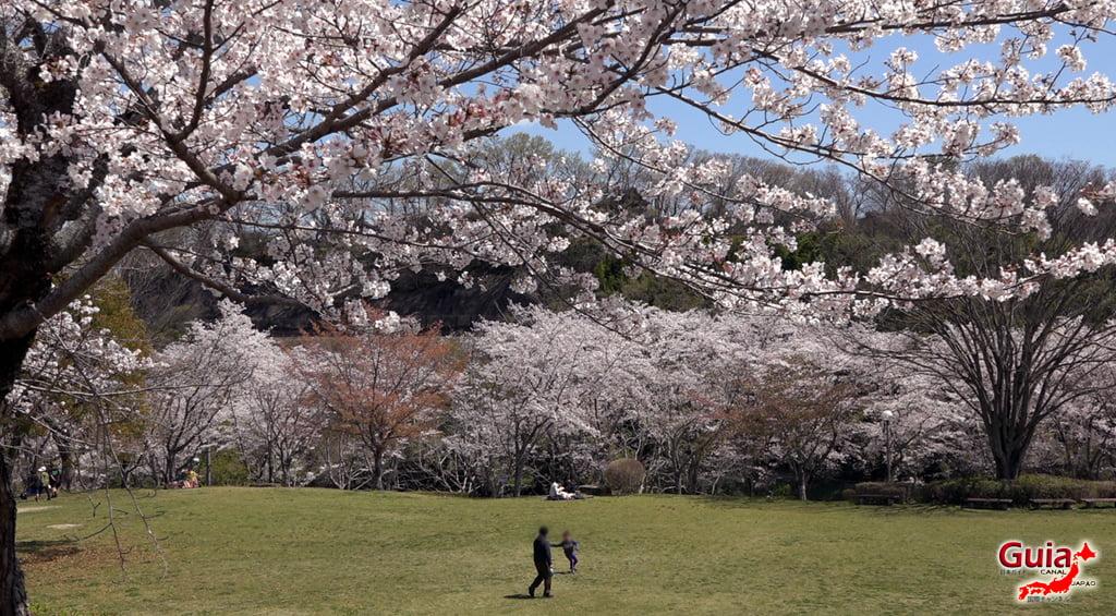 Sakura Hiratobashi Park - Toyota 「平 戸 橋 公園」 18