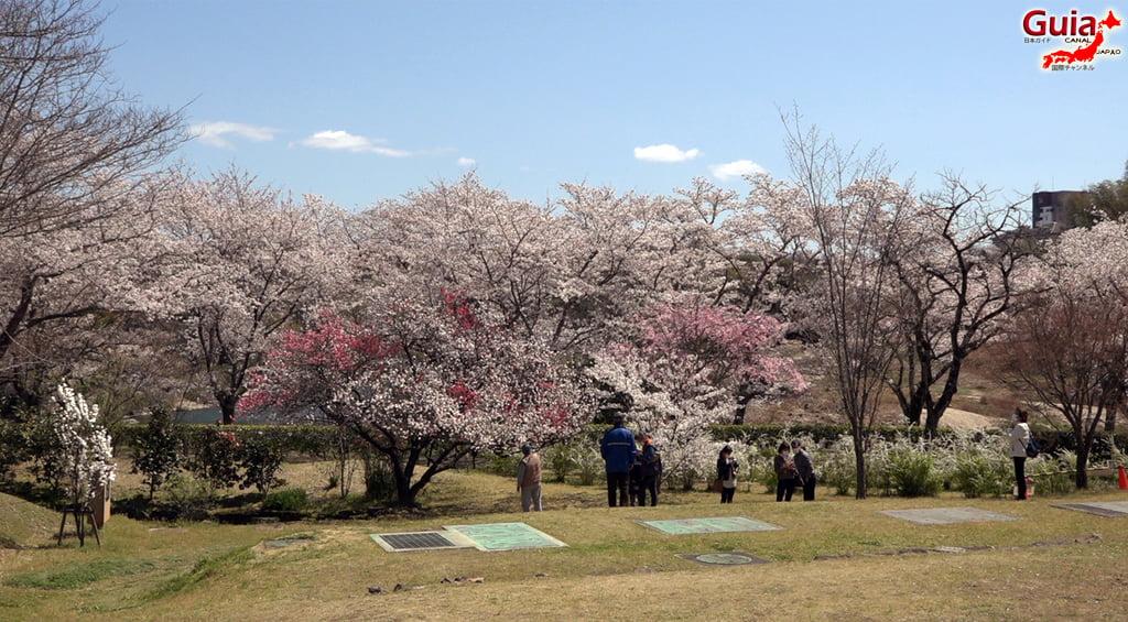 Sakura Hiratobashi Park - Toyota 「平 戸 橋 公園」 3