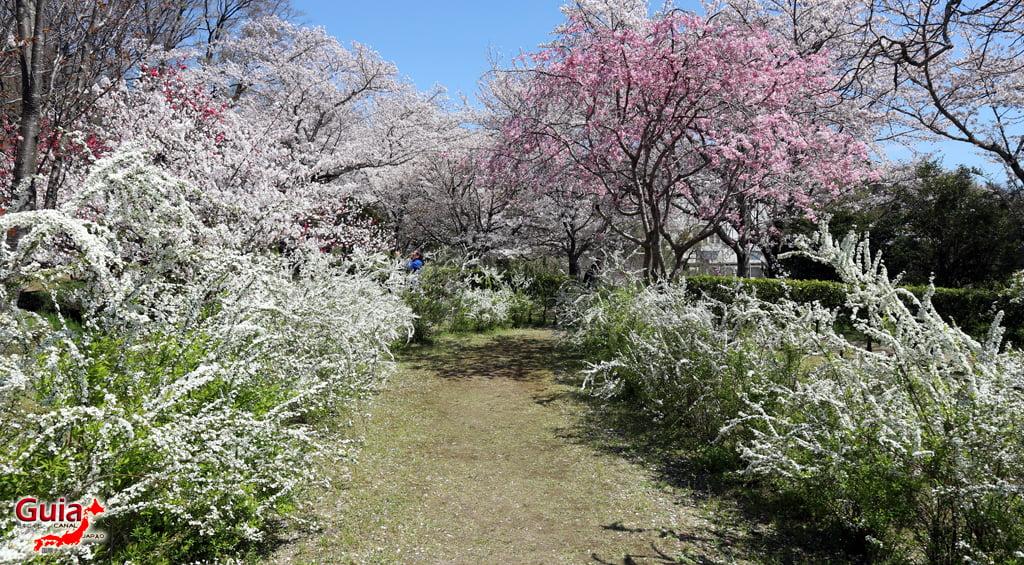 Sakura Hiratobashi Park - Toyota 「平 戸 橋 公園」 10