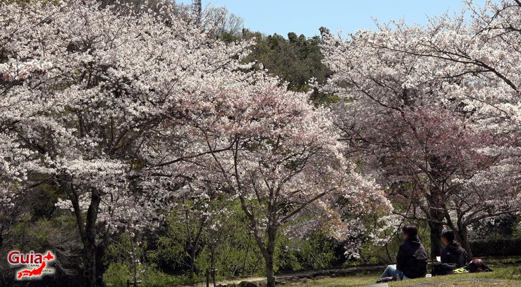 Sakura Hiratobashi Park - Toyota 「平 戸 橋 公園」 12