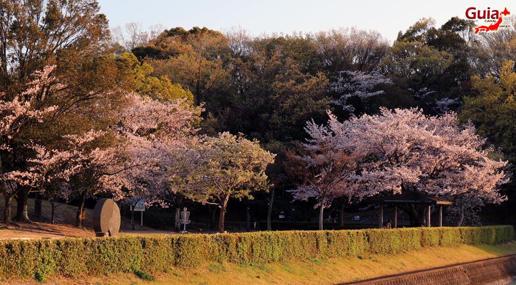 Сакура Ботагаикийн цэцэрлэгт хүрээлэн - Миёоши 「保 田 ヶ 池 公園」 11