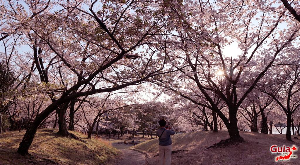Сакура Ботагаикийн цэцэрлэгт хүрээлэн - Миёоши 「保 田 ヶ 池 公園」 13