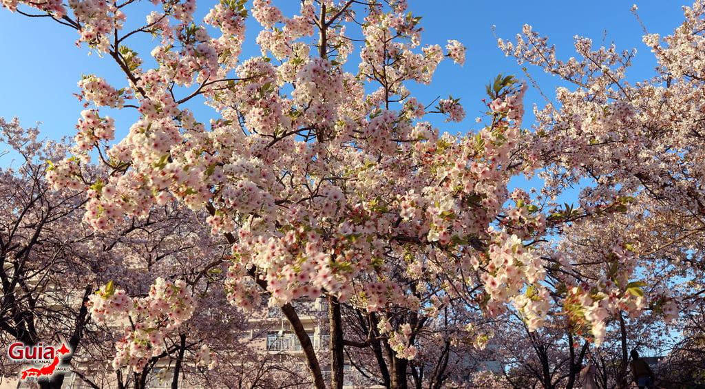 Сакура Ботагаикийн цэцэрлэгт хүрээлэн - Миёоши 「保 田 ヶ 池 公園」 15