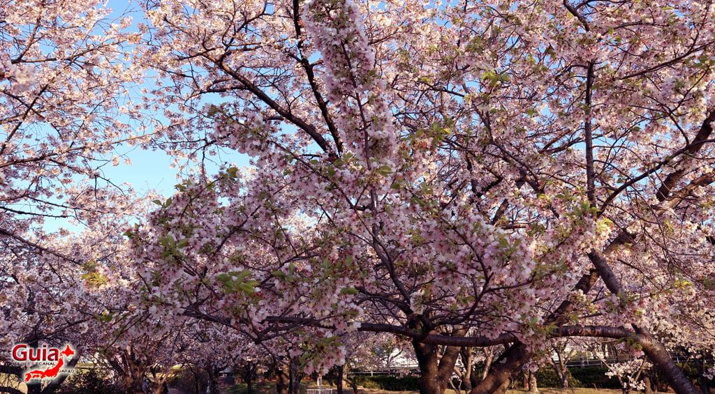 Sakura Botagaike Park - Miyoshi 「保 田 ヶ 池 公園」 3
