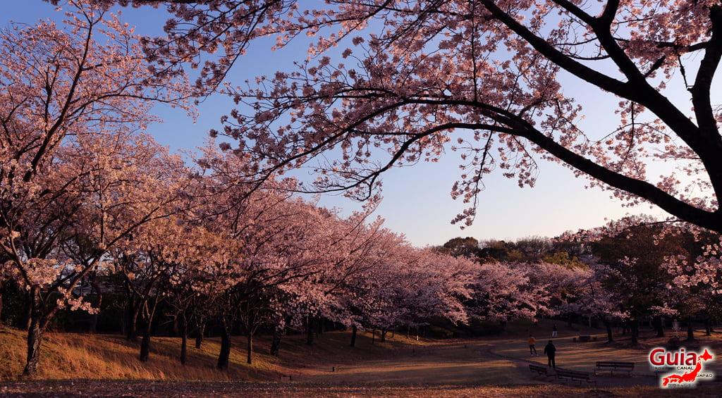 Сакура Ботагаикийн цэцэрлэгт хүрээлэн - Миёоши 「保 田 ヶ 池 公園」 4