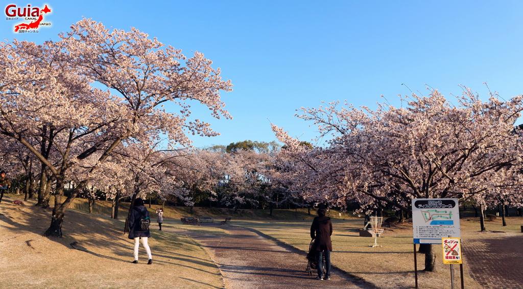 Sakura Botagaike Park - Miyoshi 「保 田 ヶ 池 公園」 6