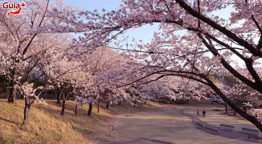 Sakura Botagaike Park - Miyoshi 「保 田 ヶ 池 公園」 7
