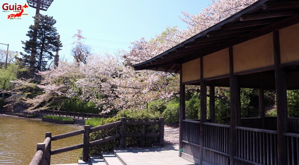 Сакура Кижо Парк - Кария 「亀 城 公園」 12
