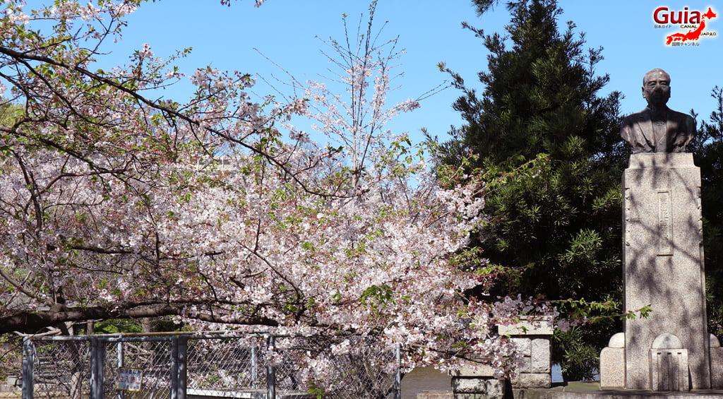 Сакура Кижо Парк - Кария 「亀 城 公園」 14