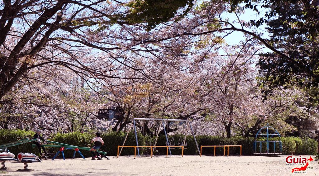Сакура Кижо Парк - Кария 「亀 城 公園」 17