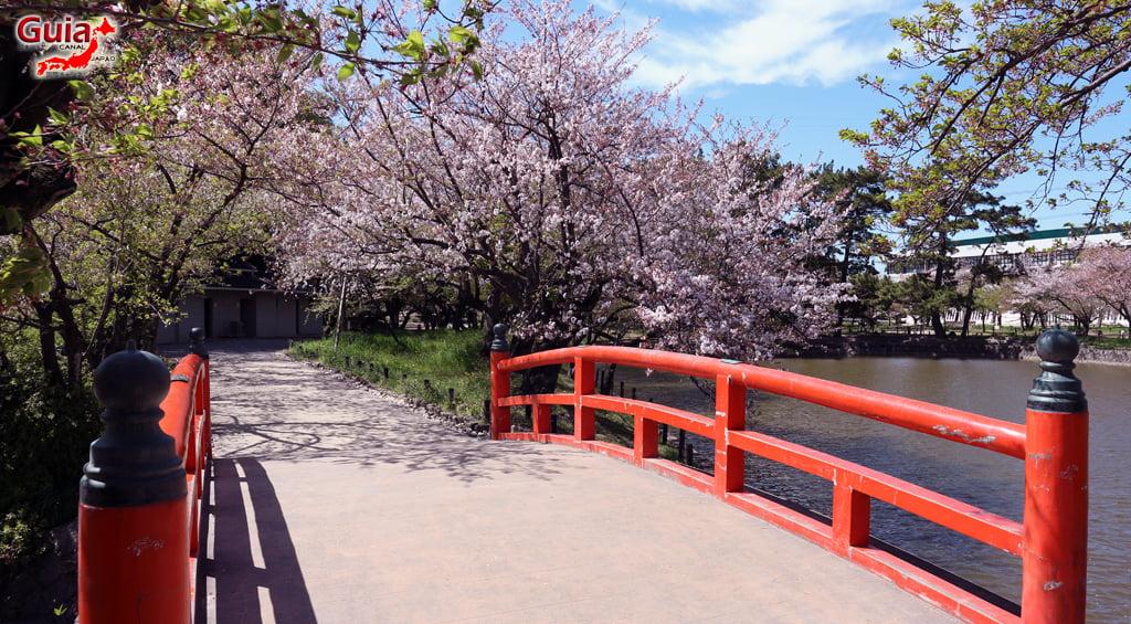 Сакура Кижо Парк - Кария 「亀 城 公園」 2