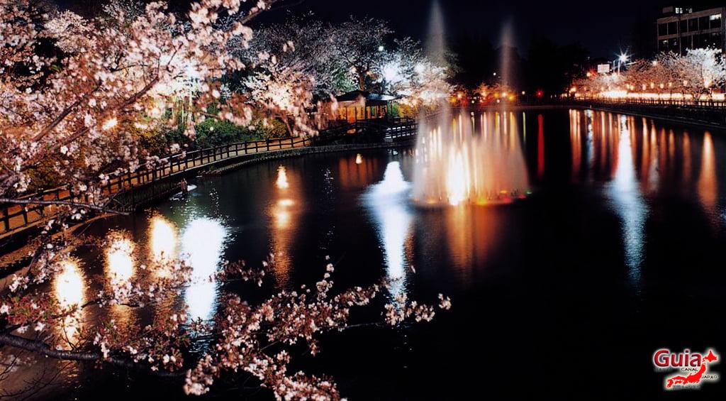 Сакура Кижо Парк - Кария 「亀 城 公園」 23