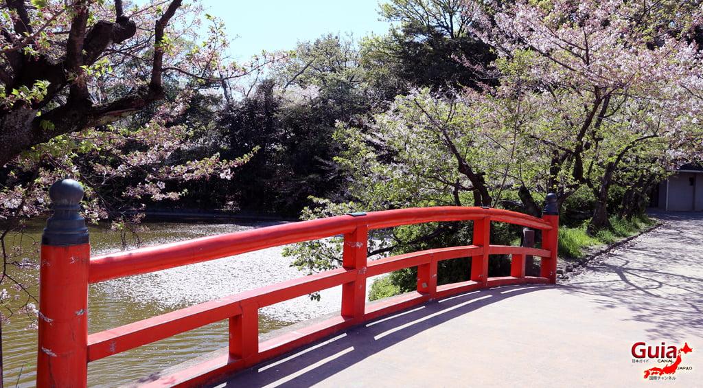 Сакура Кижо Парк - Кария 「亀 城 公園」 3