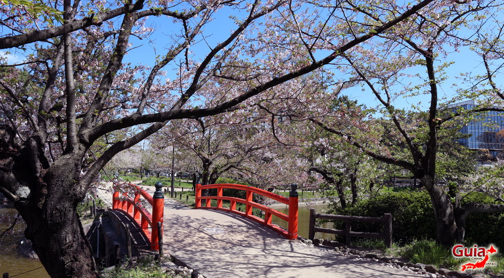 Сакура Кижо Парк - Кария 「亀 城 公園」 4