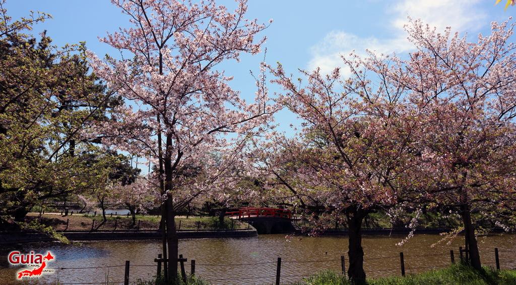 Сакура Кижо Парк - Кария 「亀 城 公園」 5