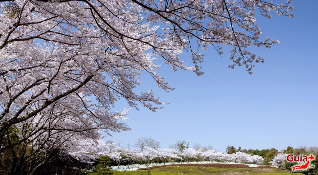 Sakura Ryokuka Center - Toyota 「緑化 セ ン タ ー」 3