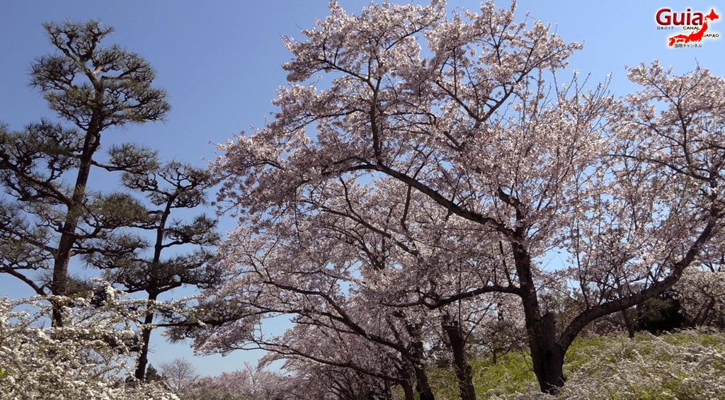 Sakura Ryokuka Center - Toyota 「緑化 セ ン タ ー」 5