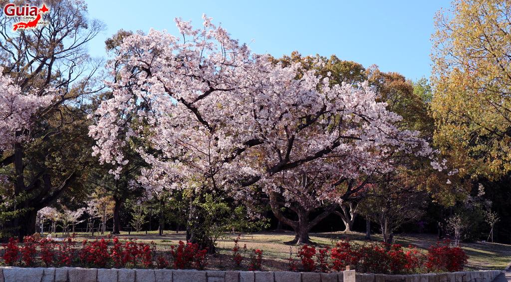Сакура Сухара Парк - Кария 「洲 原 公園」 13