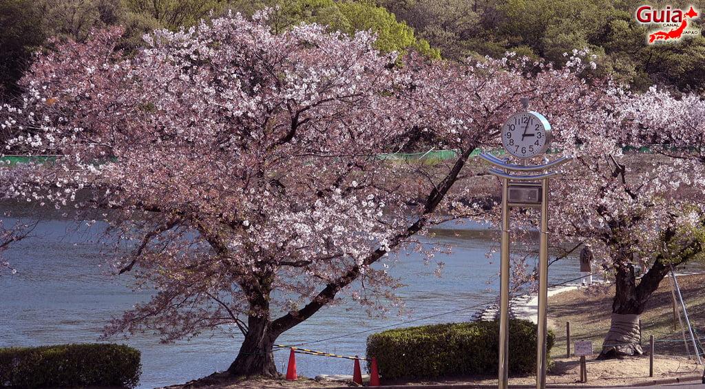 Сакура Сухара Парк - Кария 「洲 原 公園」 18