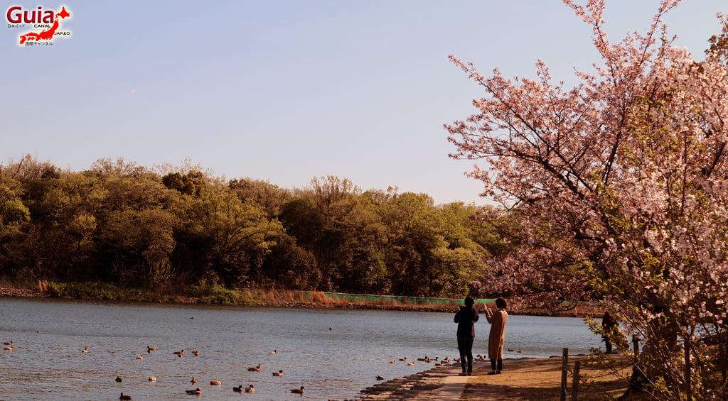 Сакура Сухара Парк - Кария 「洲 原 公園」 5