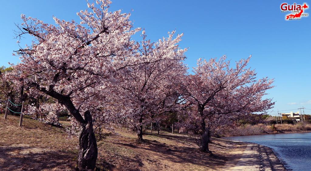 Сакура Сухара Парк - Кария 「洲 原 公園」 6