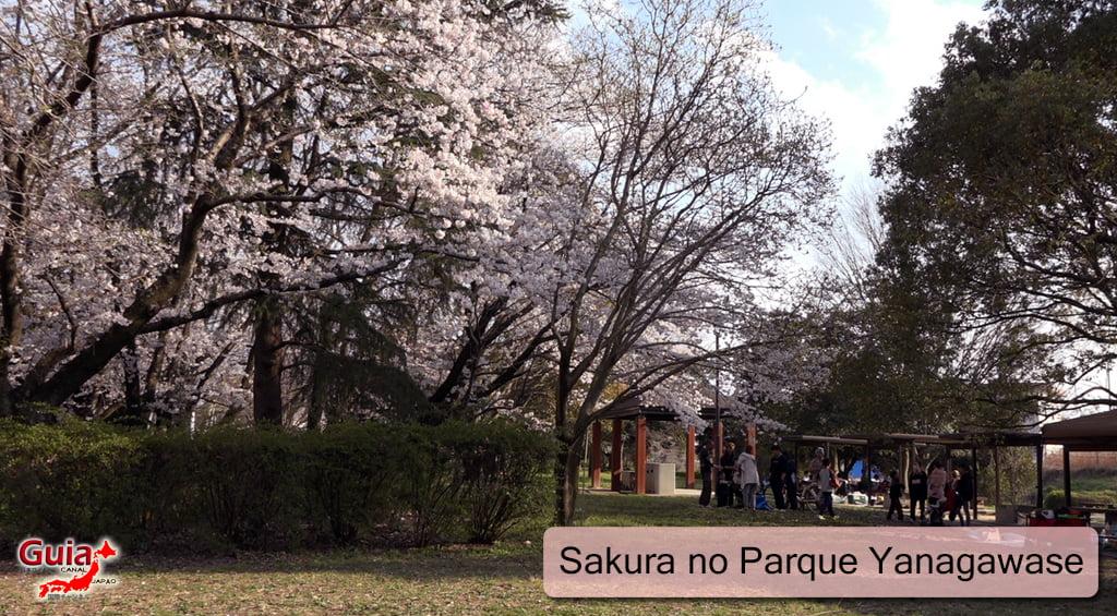 Sakura Yanagawase Park - Toyota 「柳川 瀬 公園」 1