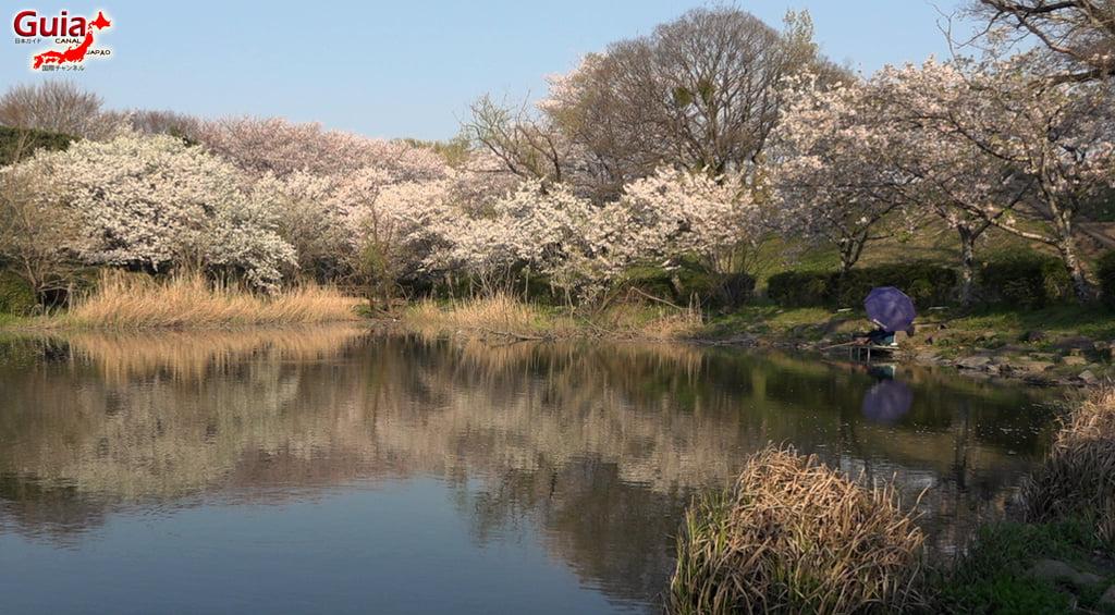 Sakura Yanagawase Park - Toyota 「柳川 瀬 公園」 11