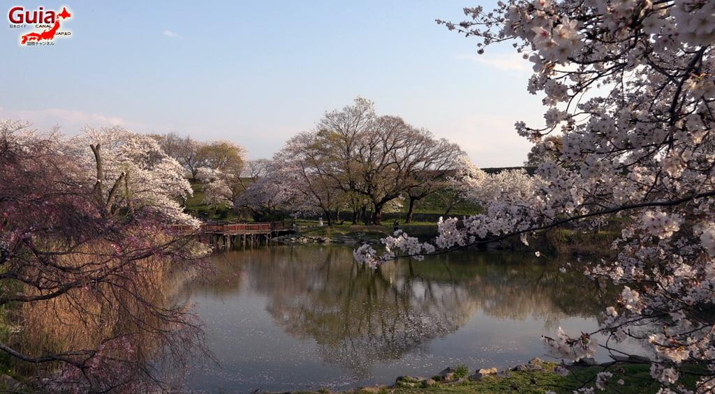 Sakura Yanagawase Park - Toyota 「柳川 瀬 公園」 12
