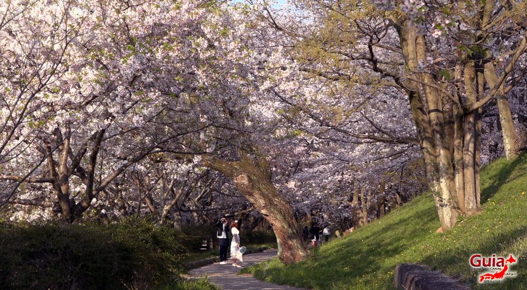 Sakura Yanagawase Park - Toyota 「柳川 瀬 公園」 16