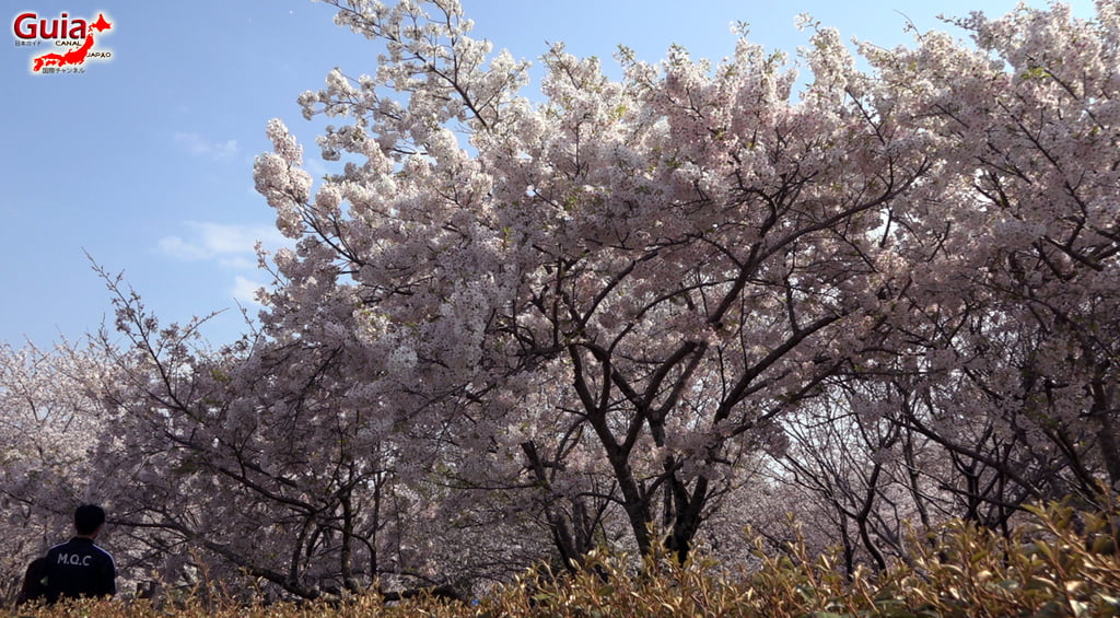 Sakura Yanagawase Park - Toyota 「柳川 瀬 公園」 17