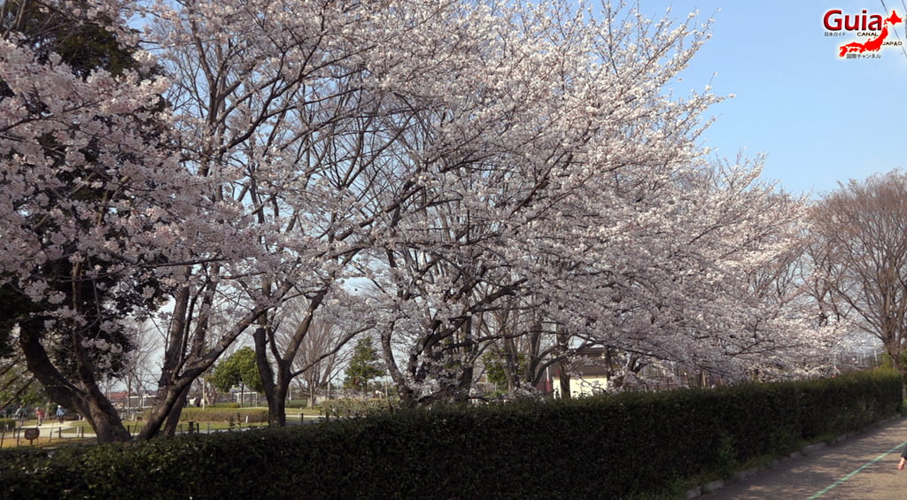 Sakura Yanagawase Park - Toyota 「柳川 瀬 公園」 20