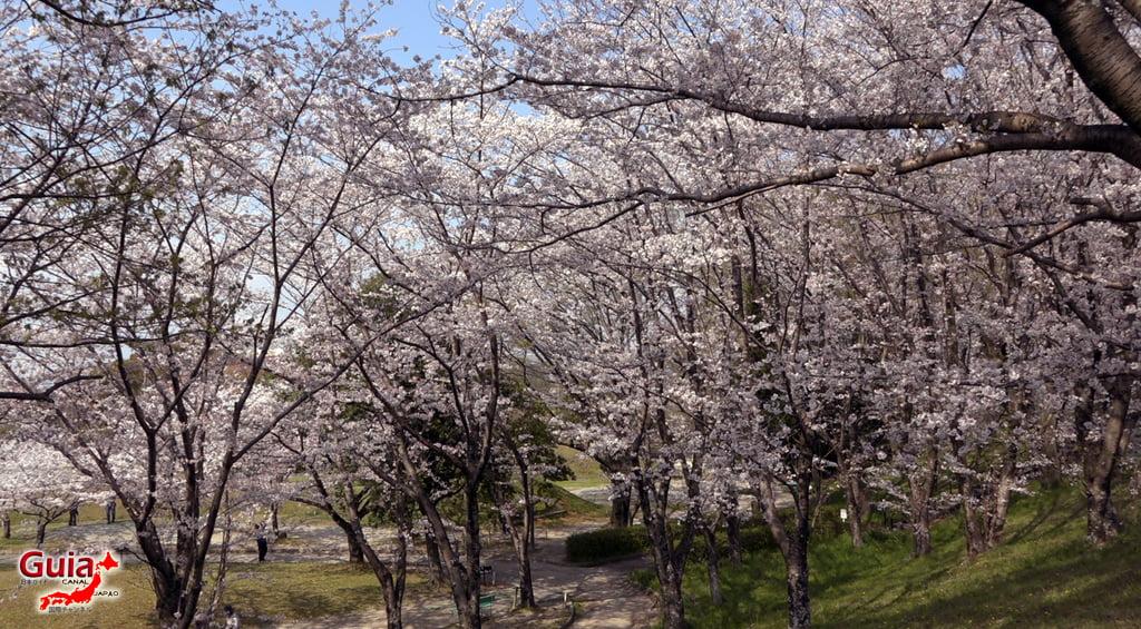 Sakura Yanagawase Park - Toyota 「柳川 瀬 公園」 2