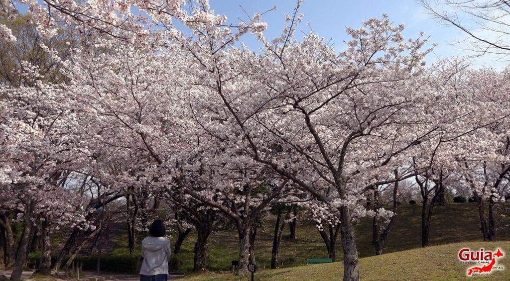 Sakura Yanagawase Park - Toyota 「柳川 瀬 公園」 4