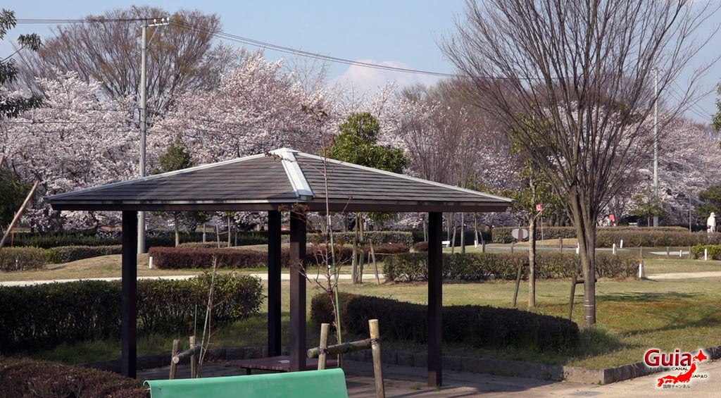 Sakura Yanagawase Park - Toyota 「柳川 瀬 公園」 9