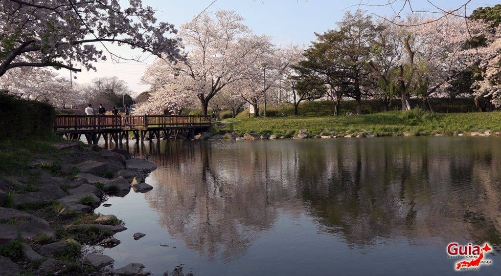 Sakura Yanagawase Park - Toyota 「柳川 瀬 公園」 10
