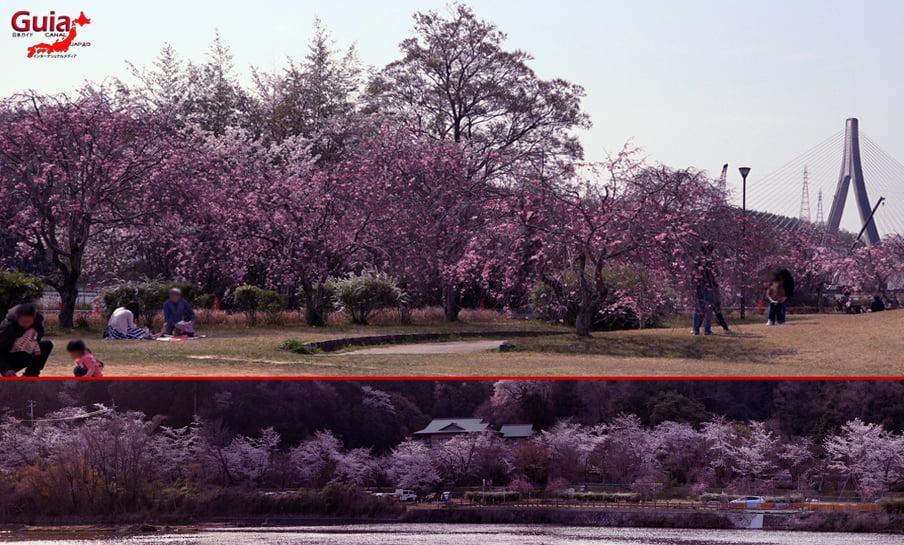 Parque Sakura Suigen - Toyota 1