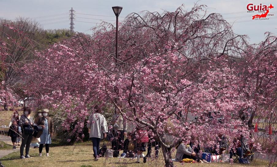 Parque Sakura Suigen - Toyota 14