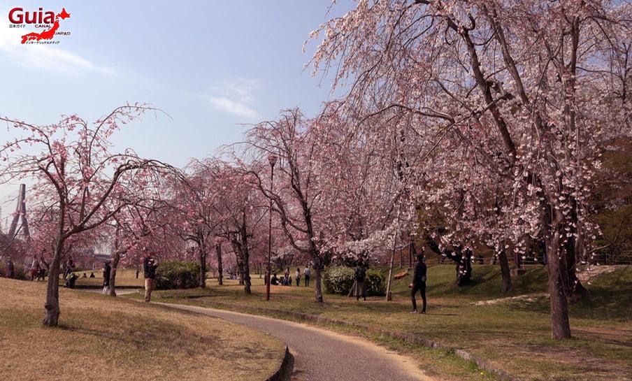 Parque Sakura Suigen - Toyota 15