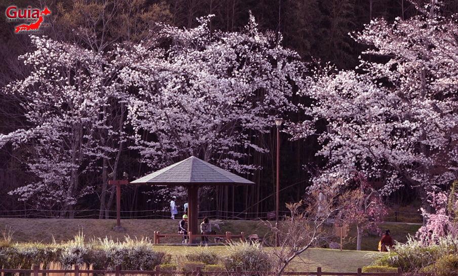Parque Sakura Suigen - Toyota 16