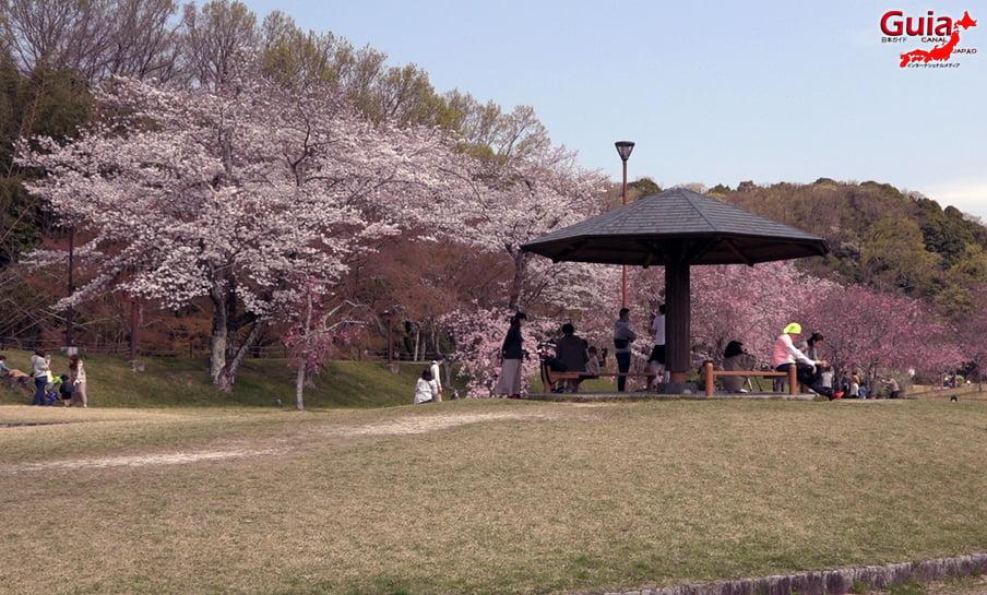 Parque Sakura Suigen - Toyota 17